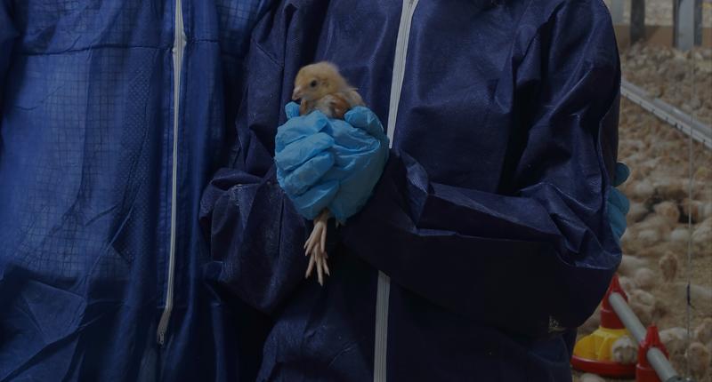 Rosehill Poultry | Case Studies