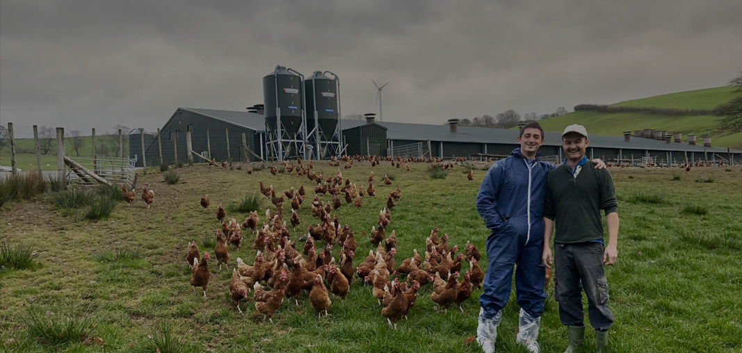 Rosehill Poultry | Homepage