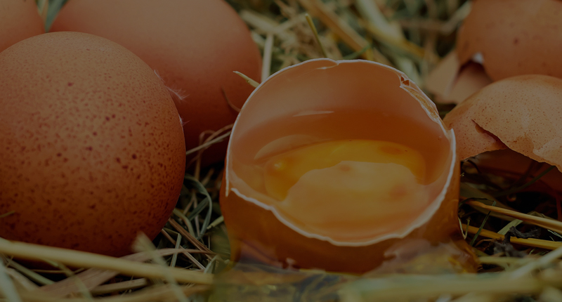Rosehill Poultry | Shop | Early Chick Feeding