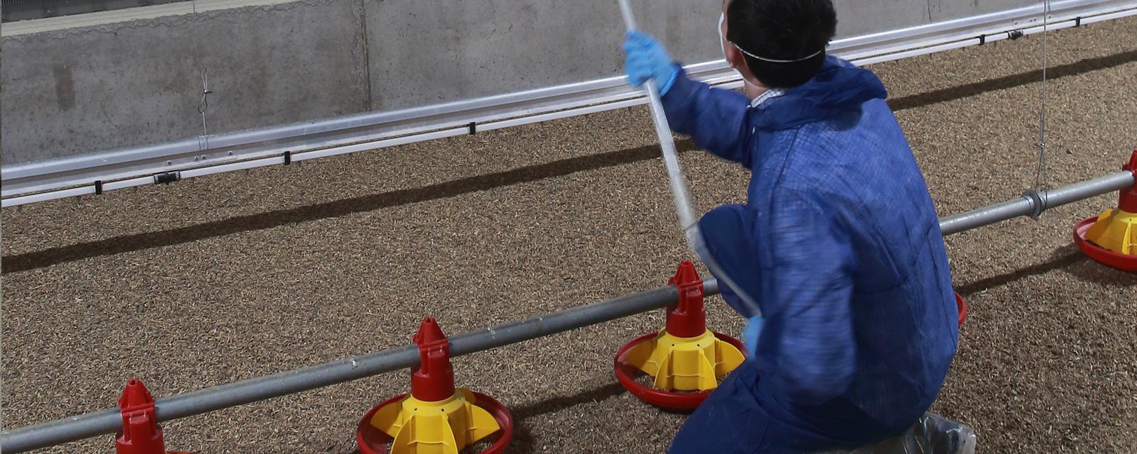 Rosehill Poultry   Disease Surveillance