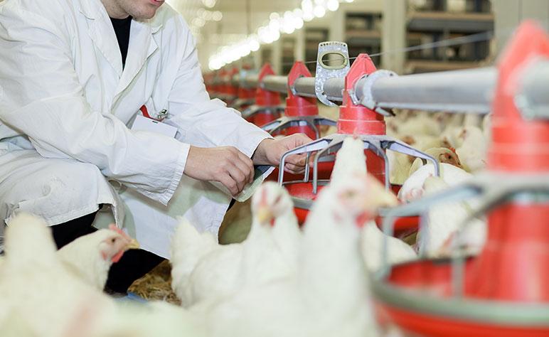 Rosehill Poultry | Services | Disease Surveillance