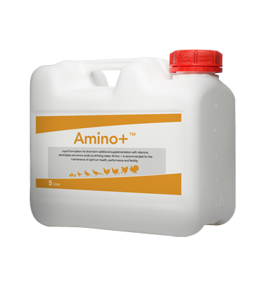 Rosehill Poultry | Products | Amino +