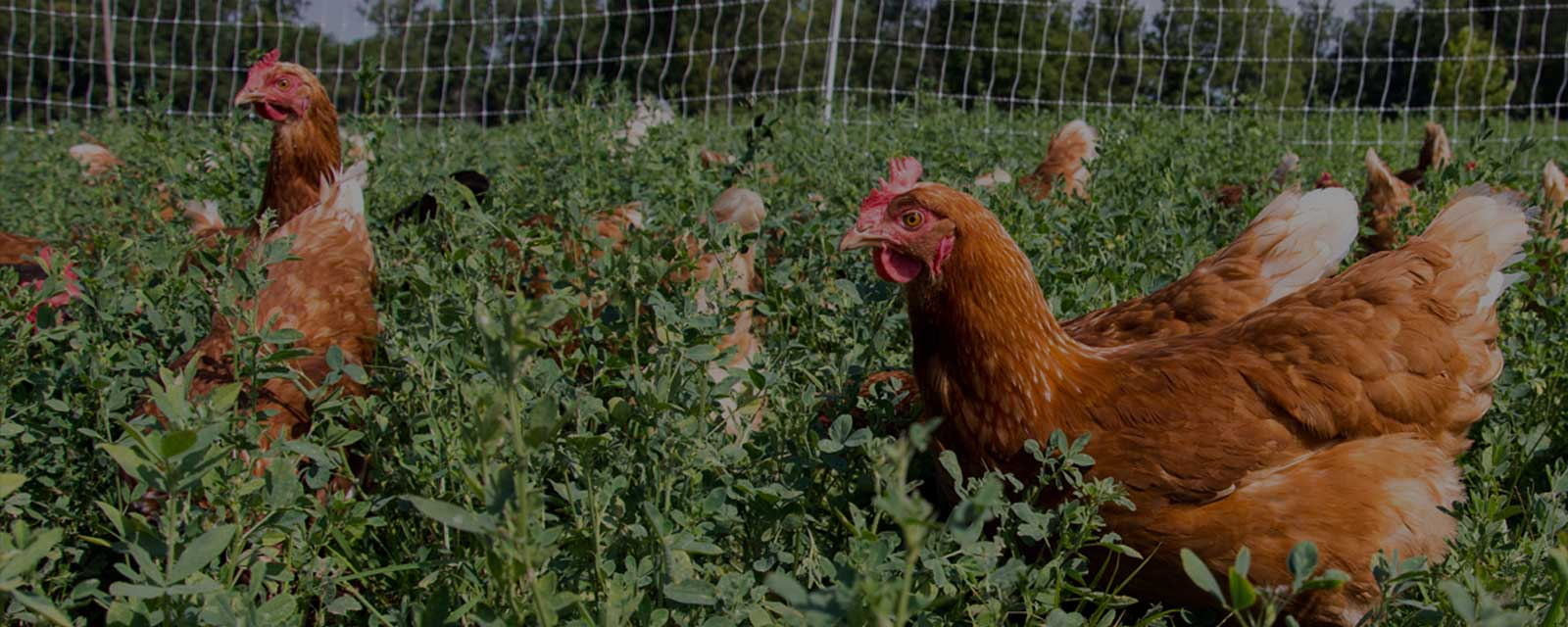 Rosehill Poultry | Contact